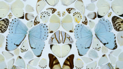 Sympathy in White Major by Damien Hirst