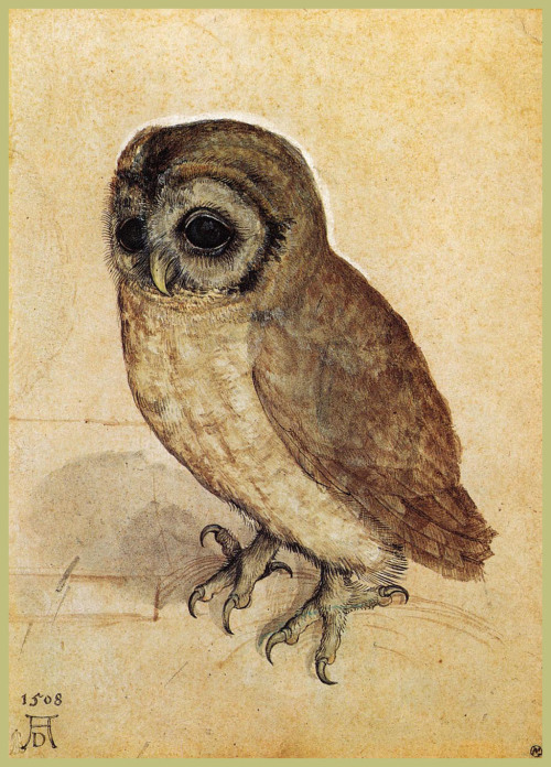 erfundenewaffe: The Little Owl by Albrecht Dürer