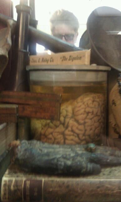 An actual human brain in a jar for only $2400 at Obscura. Unfortunately it isn't coming home with me.