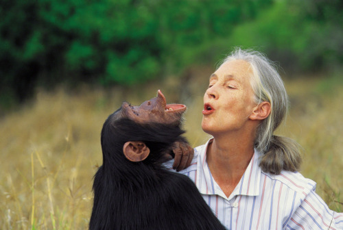 A very Happy Birthday to Jane Goodall, one of my heroes.  You are an incredible woman with a beautiful soul. Wishing you many more to come. zoom in