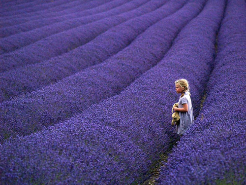 harvestheart:  Lass in the Lavender