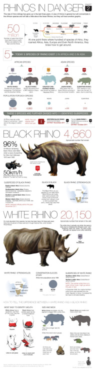 memuco:  Second part of the Rhino graphic. Still need to do one or 2 more. I need to get back to the sharks. But this is hard, harder than I though it would be. memuco