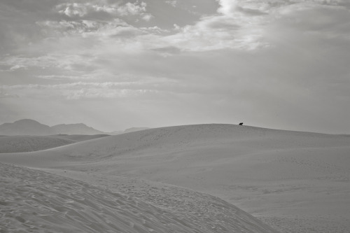 ROAD TRIP image no. 344 White Sands, NM Mark Peter Drolet + click through to see larger