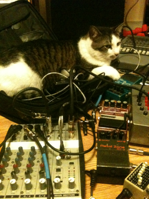 Noise cat preps for tour.