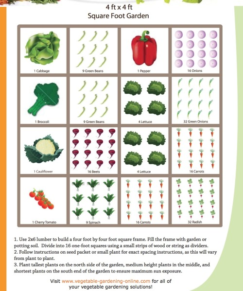 "Vegetable garden - a simple ""get started"" guide, and it only requires a 4' x 4' plot or box. Simple instructions at the link. You have just run out of excuses."