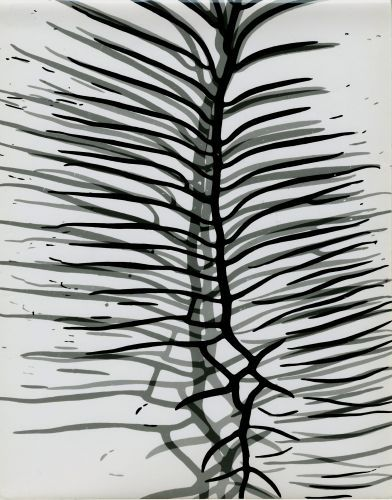 Gyorgy Kepes Untitled photogram  Joel Soroka Gallery