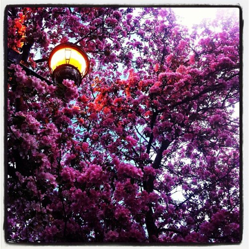 Spring is in the air (Taken with Instagram at Bancroft Park)