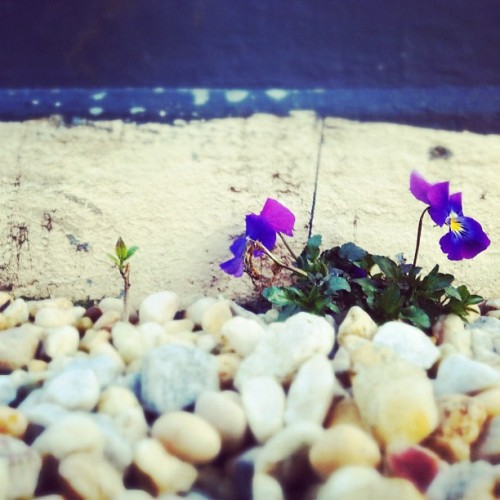Sneaky flower. :) (Taken with instagram)