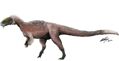 "discoverynews:  Shaggy T. Rex Cousin Was Heftiest Feathered Dino    A 3,086-pound shaggy tyrannosaur was the world's largest known feathered animal — living or extinct — according to a paper in the latest issue of Nature. The newly unearthed tyrannosaur, named Yutyrannus huali or ""beautiful feathered tyrant,"" lived about 125 million years ago in northeastern China. The over 29-foot-long non-avian dinosaur, represented by three specimens, is considerably smaller than its infamous relative T. rex, but some 40 times the weight of the largest previously known feathered dinosaur, Beipiaosaurus. keep reading"