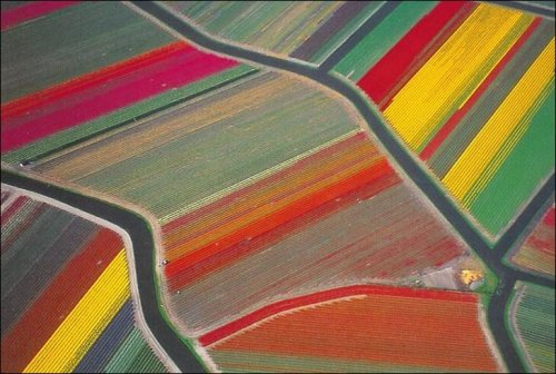 anthropologie:  An aerial view of Dutch tulip fields. Nature makes modern art! Via: Iran Proud