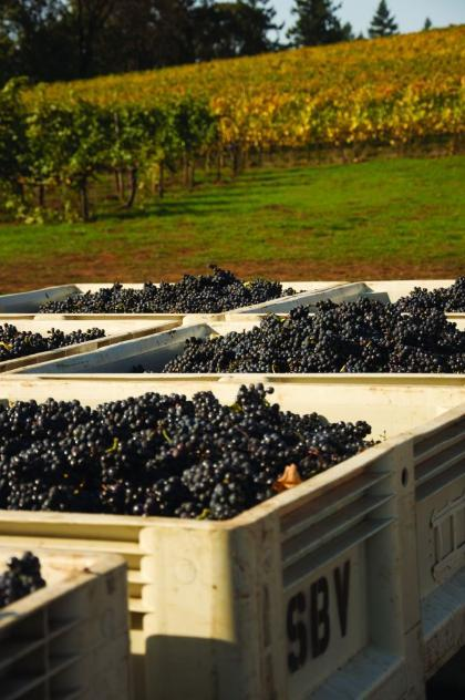 Uncorking Oregon's (and the entire West Coast's) favorite wine region.