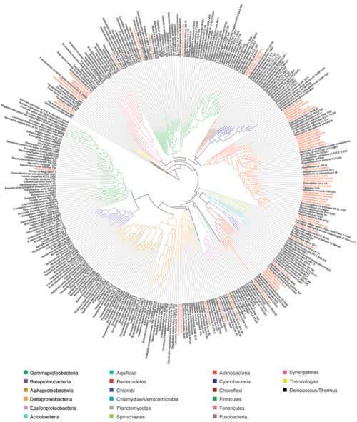 A genomic tree of bacterial life.   image de Jonathan Eisen  source : A phylogeny-driven genomic encyclopaedia of Bacteria and Archaea, Nature 462, 1056-1060 (24 December 2009)