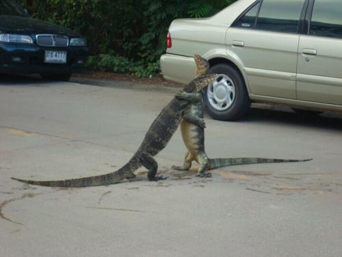tranzient:  FRANK FRANK, MAN, YOU'RE ALIVE I JUST… I SAW THIS HANDBAG MAN IT LOOKED JUST LIKE YOU. OH FRANK I'M SO RELIEVED.