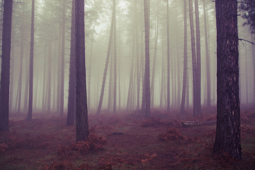 Foggy Trees by preynolds on Flickr.