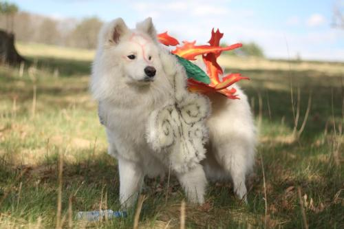 vai-russ:  berndor:  midnightcosplay:  Dante as Amaterasu from our Okami Shoot today! Expect a lot more from me!!! I remade my first cosplay which was a human Amaterasu (As many of my followers are aware seeing my WIP, today was the day everything was due!!!) and I hope it shows how much I had improved!!! Dante's owner was Susano! And very legit looking!!! I can't wait to see the rest of the photos! I am thinking to wear mine with Susano on Sunday at Anime Boston. Depending how much time I will have :)  oommmgggg look how fluffyyyy *____*  I feel kind of bad for that dog but AJ;LFDJ IT'S SO CUUUTE. AND AWESOME. BUT MOSTLY CUTE.  No worries, this dog was soooooo happy this day. His accessories are attached by a halter and are fuzzy so pretty comfortable. And his markings are food coloring that is safe washable. He loved running around the park.