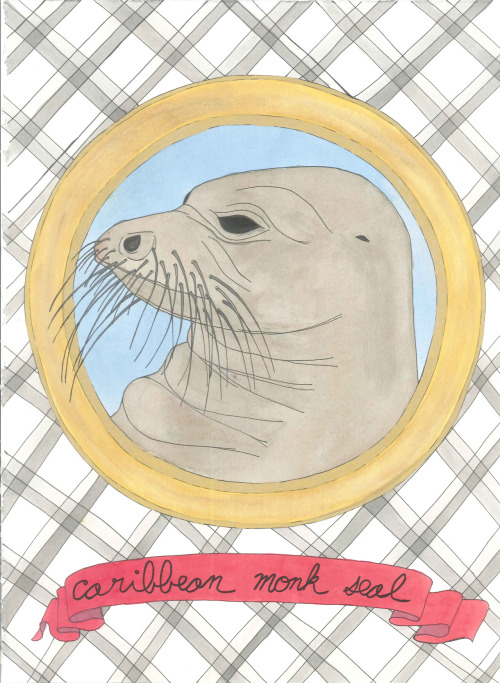 "April 4, 2012 (Caribbean Monk Seal)15""x11""ink and watercolor on paper from the Extinct Animals mini-series Buy Caribbean Monk Sealon Etsy"