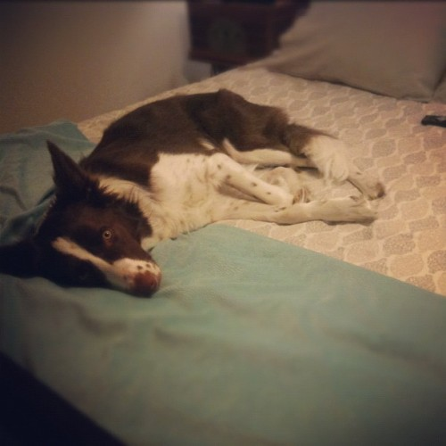 Bed hog (Taken with instagram)
