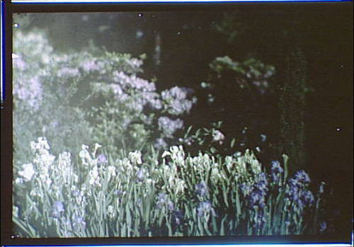 Title: Garden with flowers Creator(s): Genthe, Arnold, 1869-1942, photographer Date Created/Published: between 1906 and 1942.