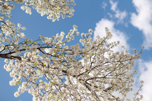 What's better than relaxing under a blossoming tree?