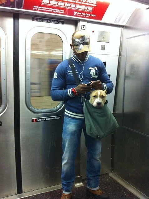 factsonpitbulls:  This.  me… yes, definitely. I'd do this.