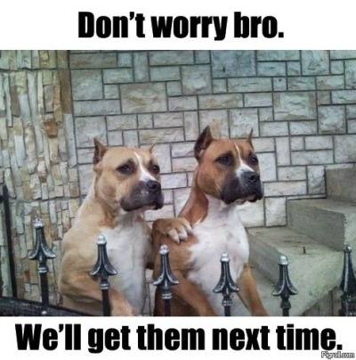Dammit, these dogs are funny.