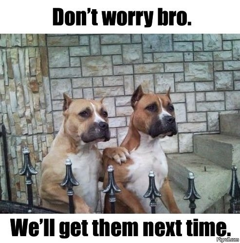 radrecorder:  Dammit, these dogs are funny.