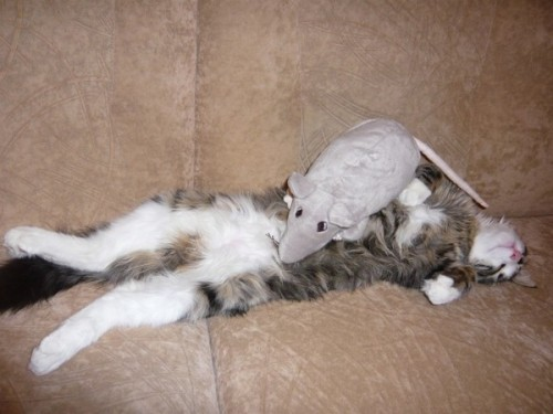 Mouse Wins… Fatality!!!