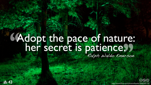 Adopt the pace of nature: her secret is patience.— Ralph Waldo Emerson