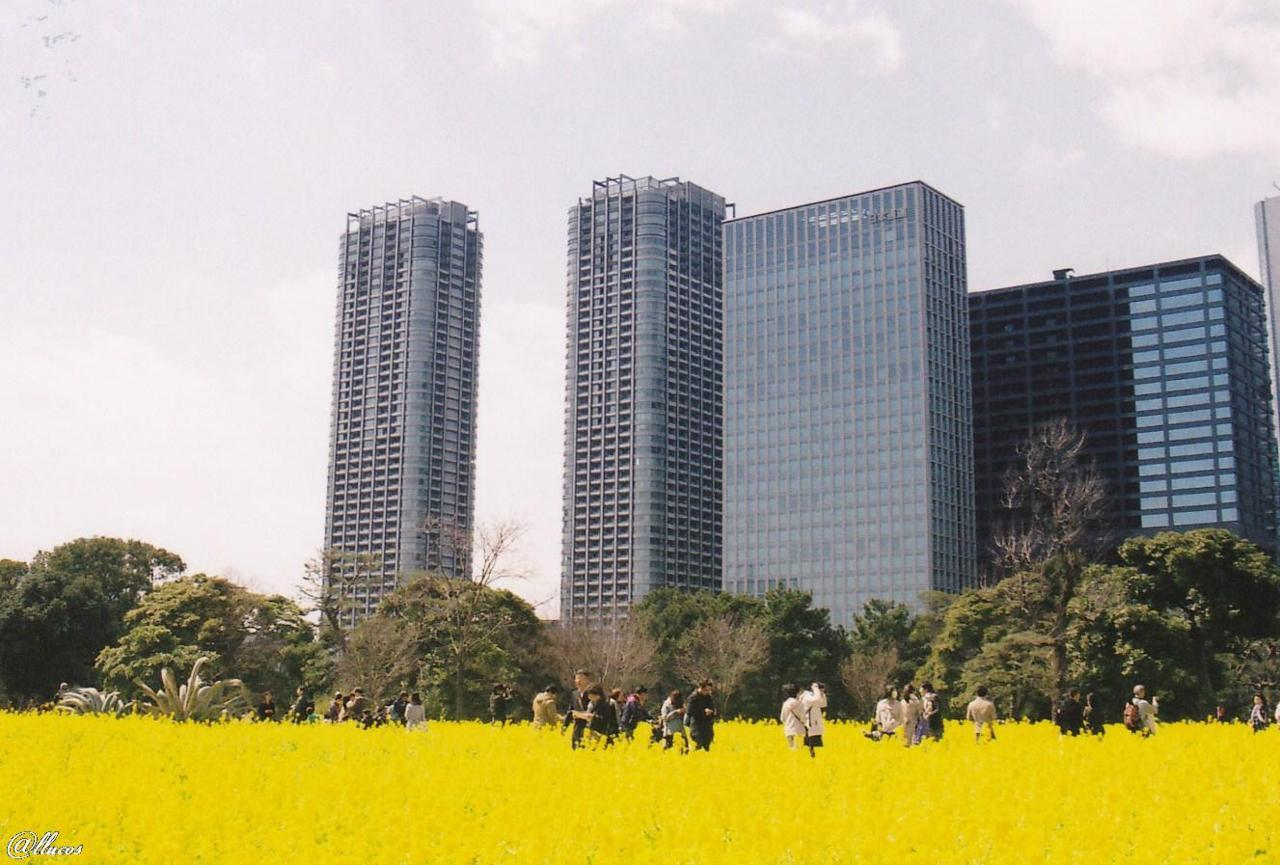 yellow field in the city
