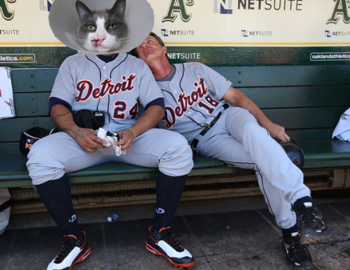 He's still recovering from that ball to the face, but Meowguel Cabrera is in the lineup for Meowpening Day.