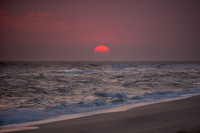 Nantucket Reds by ghinson on Flickr.