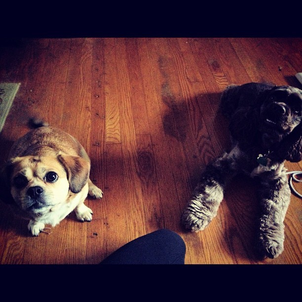 My little nuggets always make me smile. #puppies  (Taken with instagram)