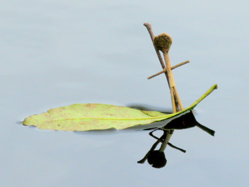 Sailing away… A little stick man on a little leaf boat, sailing off on an epic adventure.
