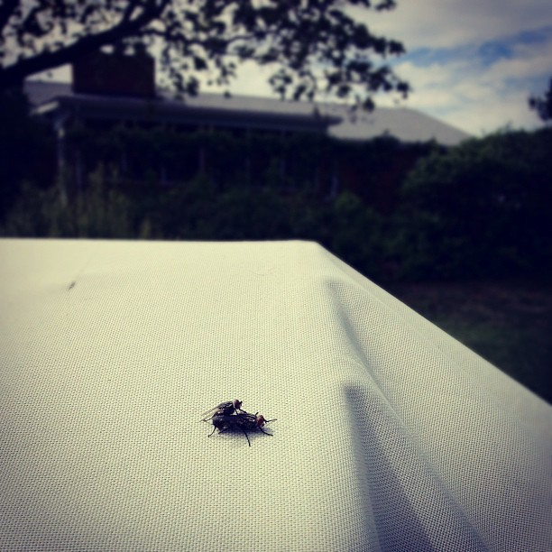 Fucking flies.  (Taken with instagram)