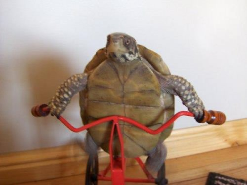 collegehumor:  Turtle Rides a Bicycle This is how the tortoise actually beat the hare.  :D