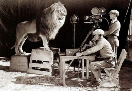 filming of Leo the Lion - mascot of MGM studios