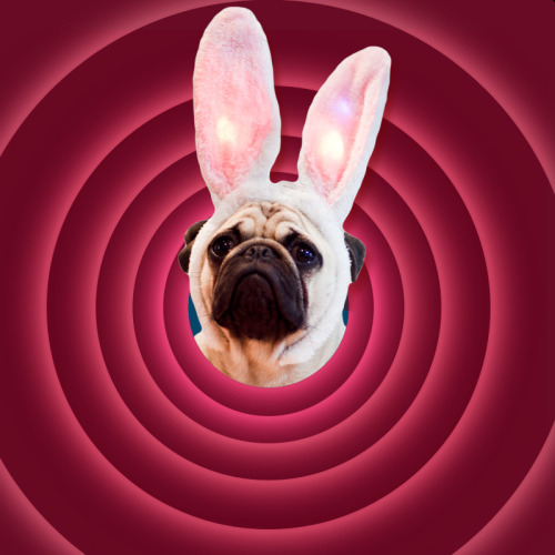 Pugs Bunny wishes you all a very happy Easter weekend!   (p.s. there is no such thing as Pugs Bunny, it's just Pancho in rabbit ears, he's an amazing actor)