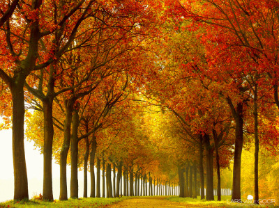 unknownskywalker:  SoFull by Lars van de Goor