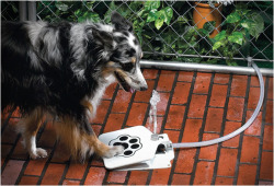 themadeshop:  Dog Water Fountain
