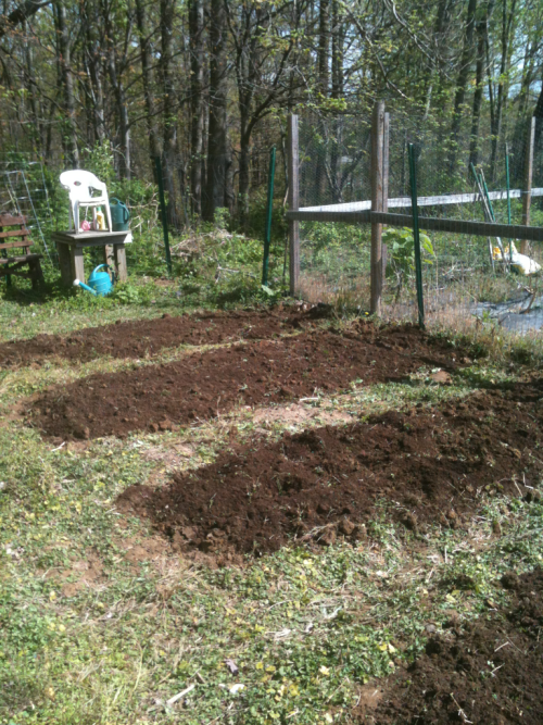 William made quick work out of preparing these garden beds.