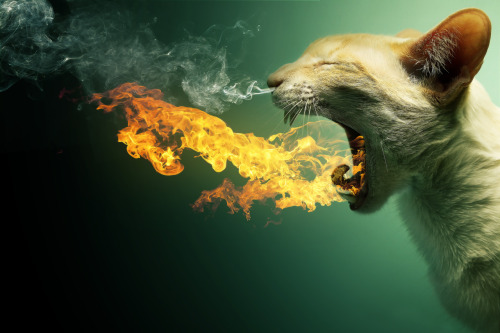 urhajos:  Flaming Cat + PSD by =PSHoudini
