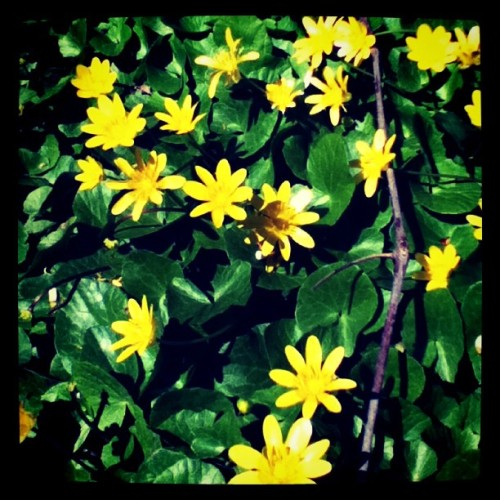 #flowers #nature #pretty  (Taken with instagram)