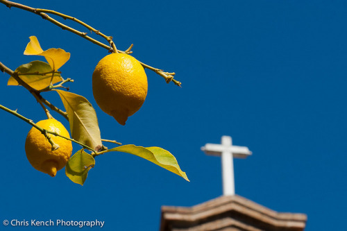 Lemon grove by Chris Kench Photography on Flickr.