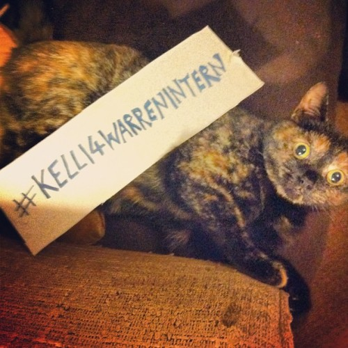 Ree's joined the cause, Have you? #kelli4warrenintern  Over night, I've had 7 more mentions and the youtube video has doubled in views - sounds small but my favourite one was from @six_shillings IN SAN FRAN! The internet is bloody stupendous. We've never spoken before but they've just gained a follower! It's going good, guys! I also talked the cat into getting behind me. She's still skeptical.