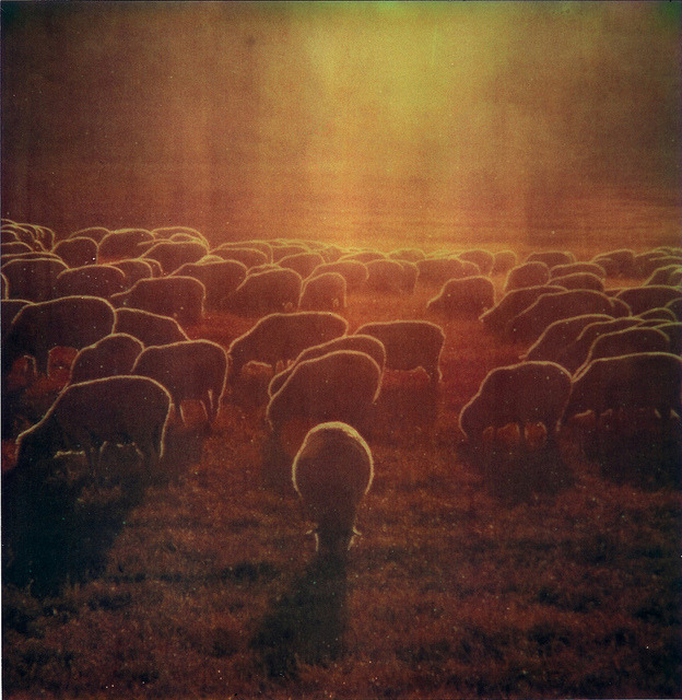 flock  (polaroid version) by Rhett Redelings on Flickr.