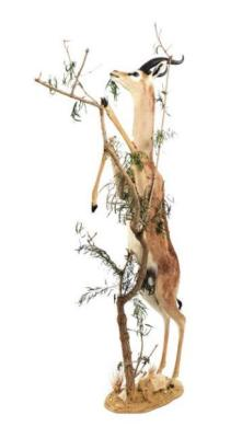 The Gazelle-Giraffe nibbles the tree at Pierre Berge's Shabby Chic 4