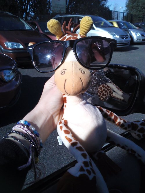sadly, being only a small girraffe human sunglasses don't fit me. they are huge!