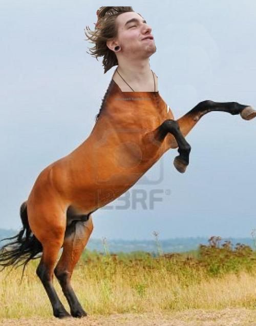 marisaeh:  A wild wacko stallion appears.
