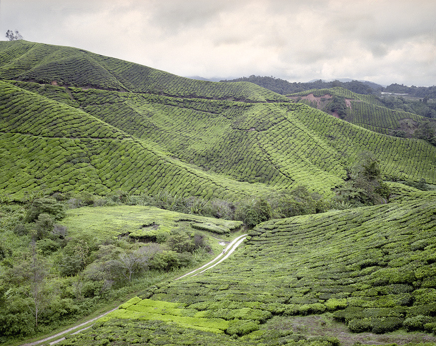 metapresquile:  Cameron Highlands, Malaysia. Oct. 2011Alex Cretey-Systermans