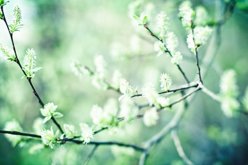 Spring by Poxonaut on Flickr.